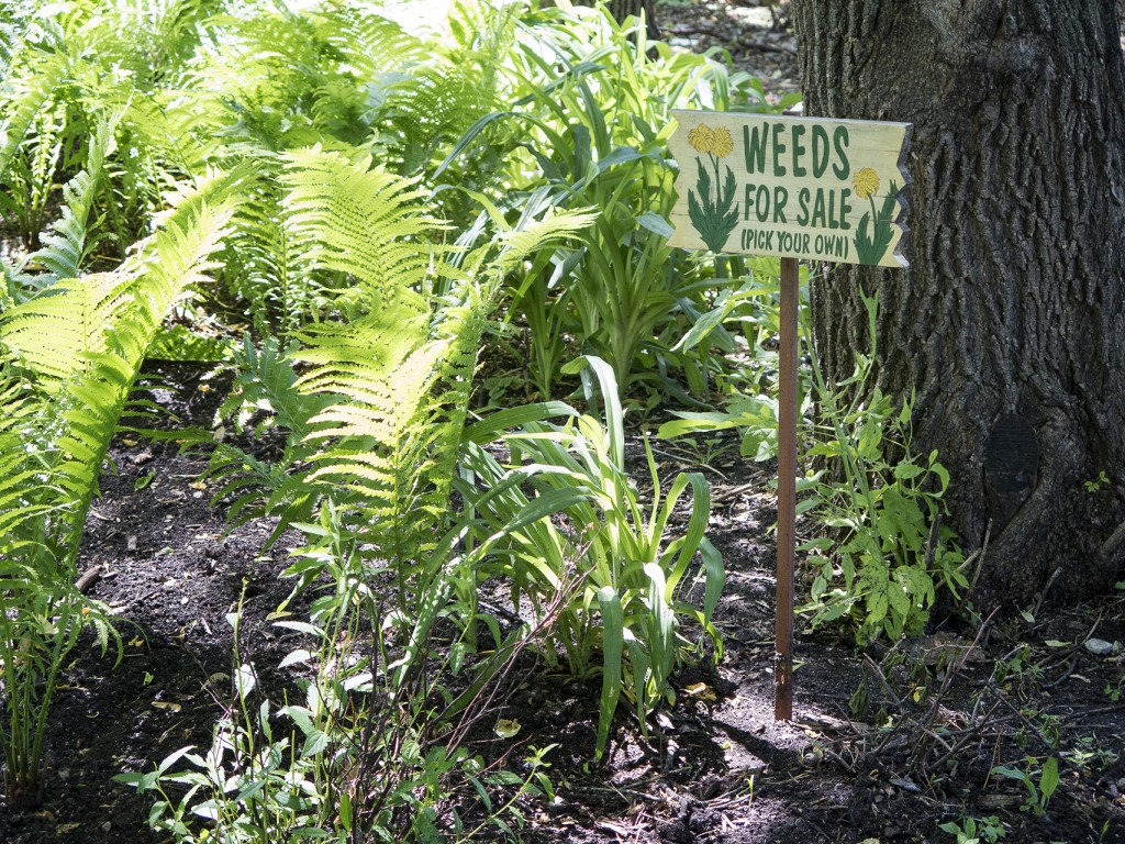weedsforsale